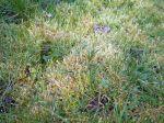 Lutter contre la mousse sur la pelouse
