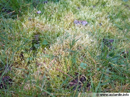 Lutter contre la mousse sur la pelouse for Lutter contre l humidite dans une chambre