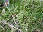 Comment éliminer définitivement la mousse au jardin ?