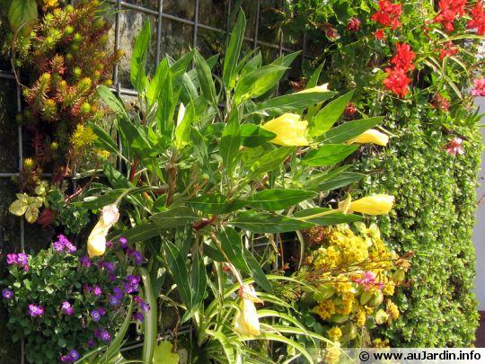Des plantes sur les murs for Mur vegetal exterieur quelles plantes