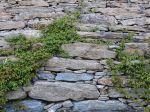 La faune des murets de pierres sèches