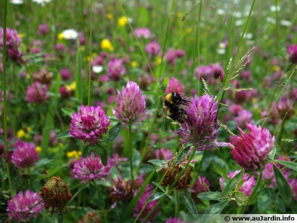 Un peu de nature sauvage au jardin, pour la biodiversité