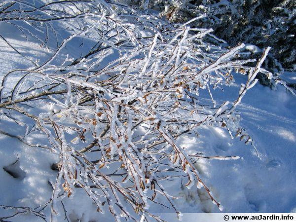 La neige fait son apparition en décembre