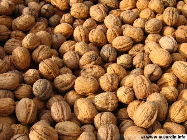 De délicieuses noix à stocker correctement