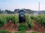 La culture de la vigne (fin)