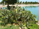 La multiplication végétative des succulentes