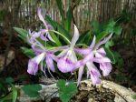 Bien choisir une orchidée