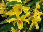 5 idées reçues concernant la culture des orchidées
