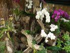 Le jardin des orchidées de Sitio Litre à Ténérife, les orchidées