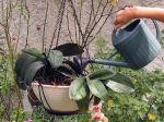 Comment augmenter le taux d'humidité pour vos plantes exotiques?