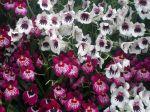 Les pollinisateurs des orchidées