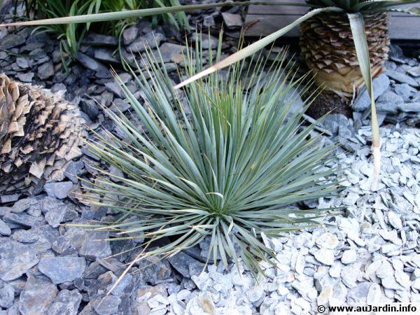 Un paillis d'ardoise dans ce massif de plantes dans le sud de la France