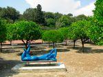 Le jardin d'agrumes du Palais Carnolès (06)