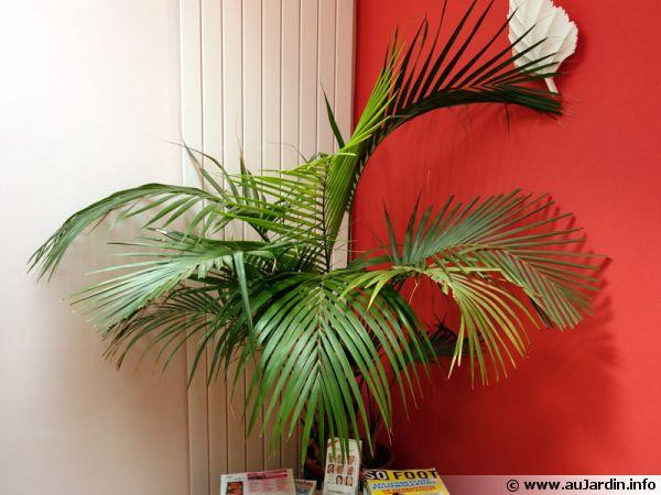 Les palmiers d'intérieur