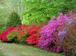Le parc botanique de Cornouaille (29)