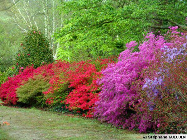 Le parc botanique de Cornouaille, rhododendrons