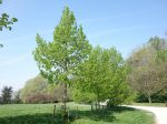 Vers un retour de la terre et des arbres en ville
