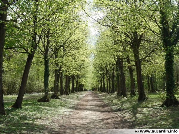 Allée du parc de Villeroy à Mennecy (91)