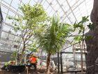 Parc zoologique de Paris, mise en place d'un palmier
