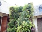 Le mur végétal par Patrick BLANC