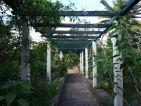 Le jardin des orchidées de Sitio Litre à Ténérife, une pergola ombragée