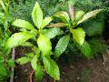 Faire germer fruits et légumes exotiques du commerce