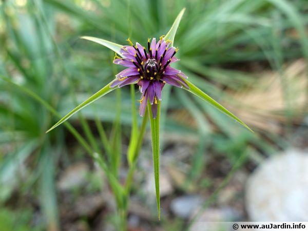 Observons cette plante aux caractéristiques spécifiques