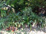 Sortir les plantes vertes