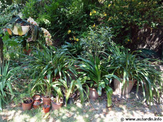 Sortir les plantes vertes for Plante verte jardin