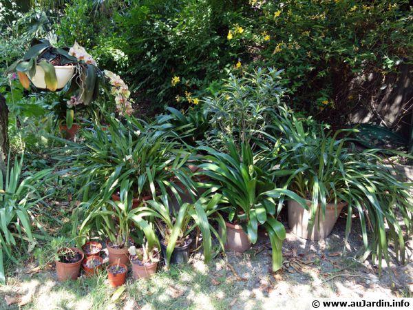 Pr parer les plantes d 39 int rieur pour les vacances - Arrosage orchidee d interieur ...