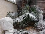 Protéger les plantes méditerranéennes dans les régions du Nord
