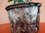 Les pots biodégradables