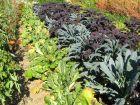 Diversifier les plantes au potager, une bonne solution contre les ravageurs