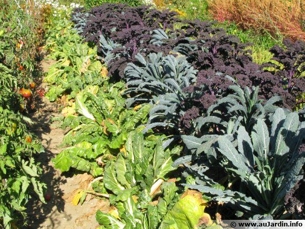 Diversifiez les plantes au potager pour accueillir les auxiliaires du jardinier