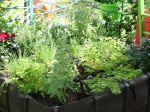 Comment créer un coin gourmand au jardin?