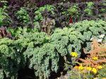 Cultiver des légumes sans traitements chimiques