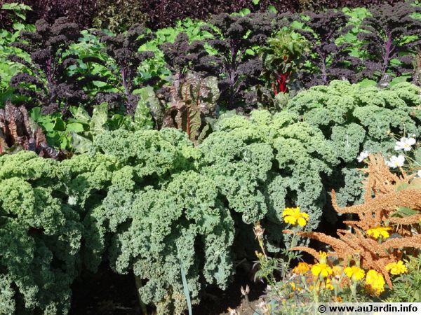 Un potager bio pour des légumes sains...
