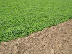 Préparer le sol du potager avant les plantations