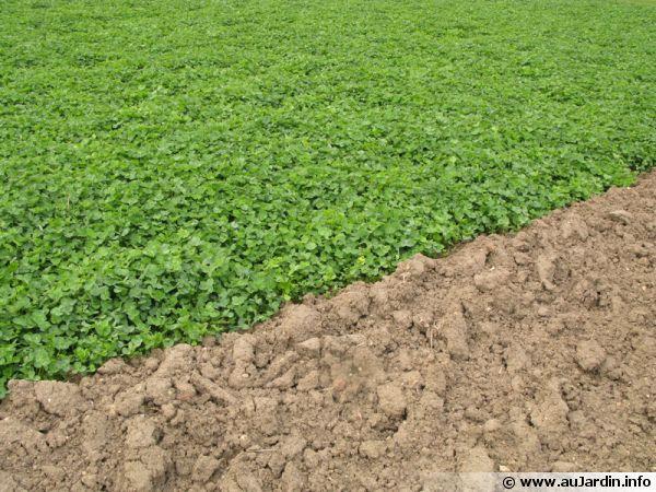 Pr parer le sol du potager avant les plantations - Faire son premier potager ...