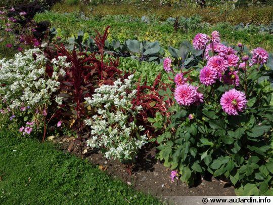 L 39 Automne Au Jardin Le Blog De Marsuline - Au Fleur De Ton Jardin ...