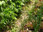 Lutter contre les mauvaises herbes au potager