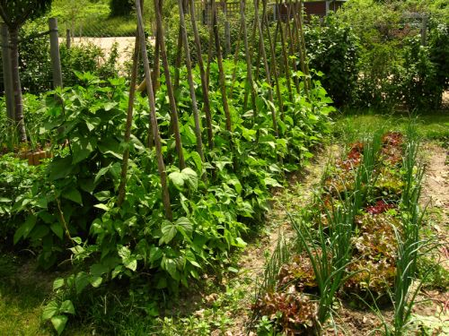 Organiser son potager - Organiser son jardin ...