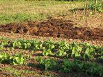 Un locataire peut-il transformer un potager en pelouse ou le contraire ?