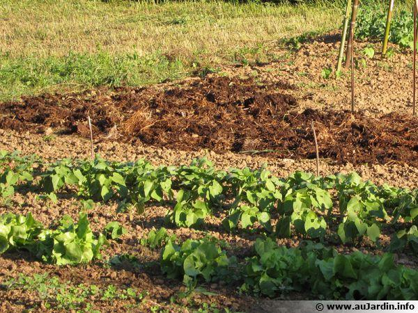 Transformer un potager en pelouse ou le contraire, est-ce possible pour un locataire ?