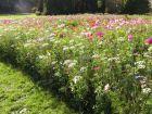 Accueillir la biodiversité en mars