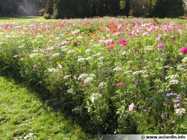 Réservez un espace à une prairie fleurie qui attire les insectes pollinisateurs