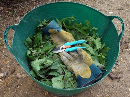 Le purin d 39 ortie - Comment utiliser le purin d ortie ...