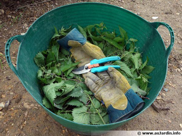 Récoltes des orties dans un seu dans lequel on ajoutera de l'eau de pluie