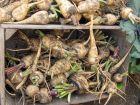 Conserver ses fruits et légumes tout l'hiver