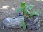 Recyclage d'une chaussure comme potée